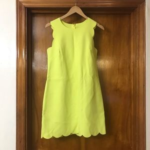 Scallop Dress In Citron Yellow